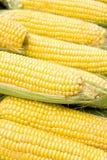 作为背景的玉米 库存照片