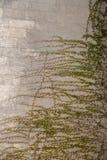 作为背景的绿色树叶子 库存图片