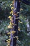 作为背景的绿色树叶子 免版税图库摄影