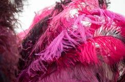 作为背景的美丽的红色鸟羽毛 库存照片