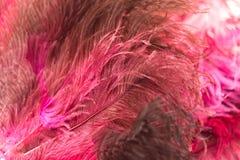 作为背景的美丽的红色鸟羽毛 免版税库存照片