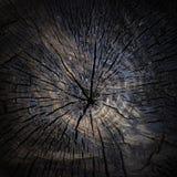 作为背景的被烧焦的树桩特写镜头 免版税库存图片