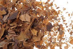 作为背景的被击碎的和干烟草叶子 免版税库存照片