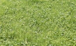 作为背景的绿色春天草 库存照片