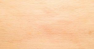 作为背景,木纹理的轻的软的木表面 库存图片