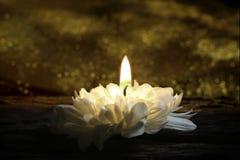 作为蜡烛的延命菊绽放 库存照片