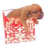 作为袋子礼品存在小狗 免版税库存照片