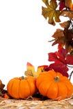作为被分类的背景秋天蔬菜 库存图片