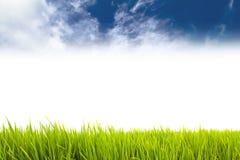 作为边界的新鲜的绿草在水平的框架的更低的边在无缝的空的白色背景中与蓝天 免版税库存照片