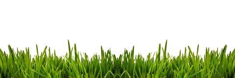 作为边界的新鲜的绿草在水平的框架的更低的边在无缝的空的白色背景中 库存图片