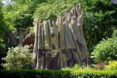 作为雕塑被传统化的老,大树桩 在绿色附近 beauvoir 免版税库存照片