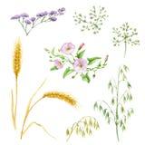 作为颜色设计要素花卉滚动vectorized愿望您 皇族释放例证