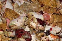 作为食物的新鲜的青蛙 库存图片