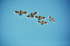 作为鸟释放 免版税库存照片