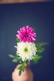 作为8八数字的两朵花 免版税图库摄影