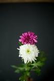 作为8八数字的两朵花 库存图片