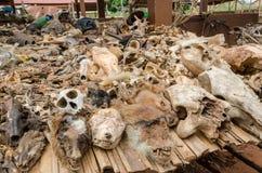 作为治疗和护符被提供的动物尸体的部分在室外伏都教迷信市场上在贝宁 免版税库存照片