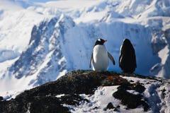 作企鹅二 免版税库存照片