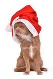 作帽子圣诞老人佩带的圣诞节狗 免版税库存图片