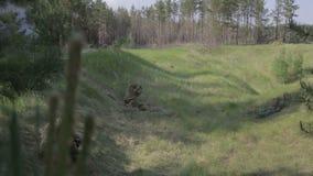 作战交火在森林 ii战争世界 争斗的重建 影视素材