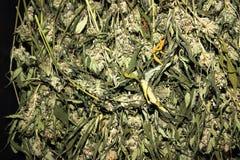 作未加工的医疗大麻的加利福尼亚 库存图片
