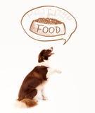 作梦关于食物的逗人喜爱的博德牧羊犬 库存照片