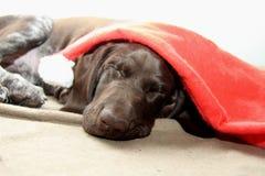 作梦圣诞老人的狗 免版税库存照片