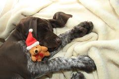 作梦狗的圣诞节 免版税库存图片