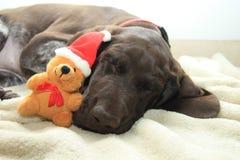 作梦狗的圣诞节 免版税库存照片