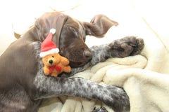 作梦狗的圣诞节 图库摄影