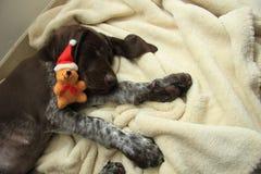 作梦狗的圣诞节 库存图片