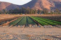 作物栽培在内地帝国 免版税库存图片
