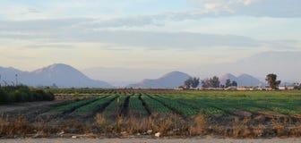 作物栽培在内地帝国 库存照片