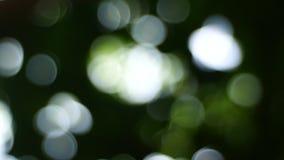 作用bokeh背景,圣诞树bokeh光庭院,假日摘要背景 影视素材