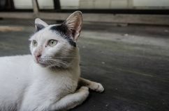 作白日梦的猫 库存图片