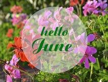 你好与手书面字法的6月欢迎卡片在自然花卉大竺葵模糊的背景 库存图片