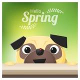 你好与看一只红色瓢虫的哈巴狗狗的春季背景 免版税库存图片