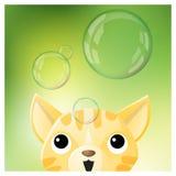 你好与看肥皂泡的猫的春季背景 库存图片