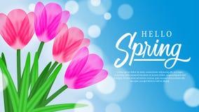 你好与秀丽郁金香的春天背景开花开花 库存图片