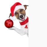 你好再见圣诞节狗 免版税库存图片