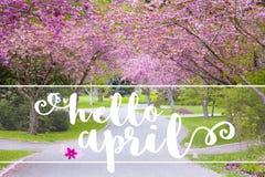你好在一条安静的乡下公路的4月消息标示用春天fl 库存图片