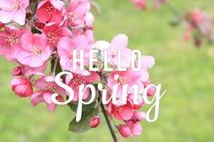 你好在开花的树枝背景的春天文本 库存图片