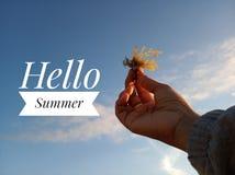 你好夏天问候 年轻女人手的模糊的图象拿着海杂草反对明亮和天空蔚蓝的在一好日子 免版税库存照片
