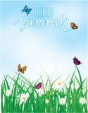 你好夏天,在草与花,春天上的蝴蝶飞行 库存图片