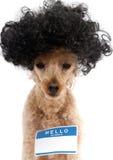 你好我的名字是…在大头发的狗的贴纸 免版税库存照片