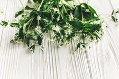 你好春天图象 与绿叶的美丽的矮小的白花 免版税库存图片