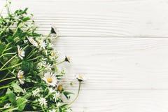 你好春天图象 与绿叶的美丽的矮小的白花 图库摄影
