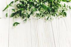 你好春天图象 与绿叶的美丽的矮小的白花 库存图片