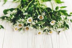 你好春天图象 与绿叶的美丽的雏菊花在鲁斯 库存图片