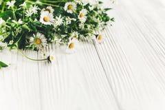 你好春天图象 与绿叶的美丽的雏菊花在鲁斯 免版税图库摄影